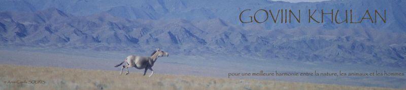 Goviin Khulan